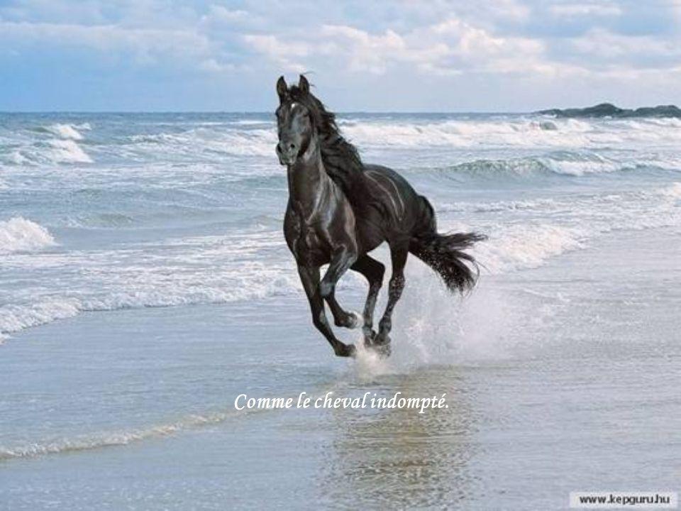 Comme le cheval indompté.