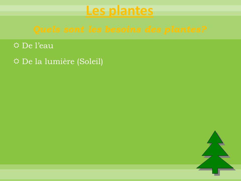 Les plantes Quels sont les besoins des plantes