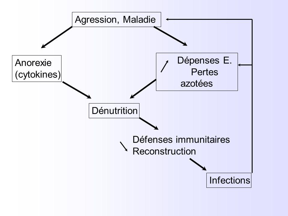 Agression, Maladie Dépenses E. Pertes azotées. Anorexie. (cytokines) Dénutrition. Défenses immunitaires.