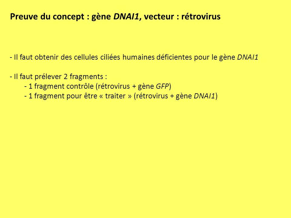 Preuve du concept : gène DNAI1, vecteur : rétrovirus