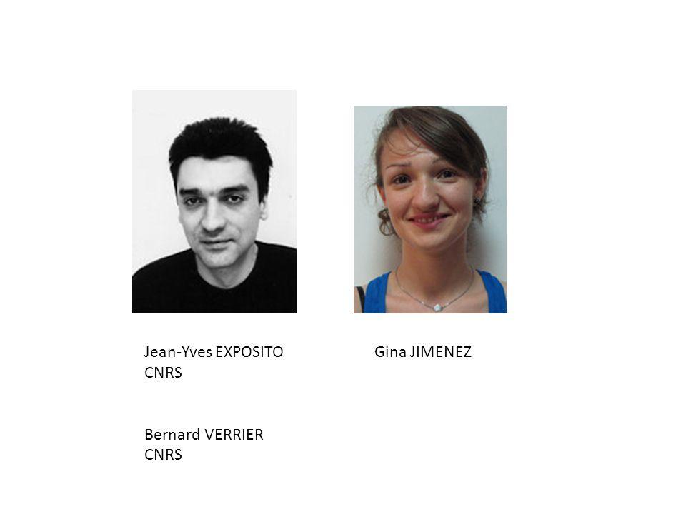 Jean-Yves EXPOSITO CNRS Bernard VERRIER Gina JIMENEZ