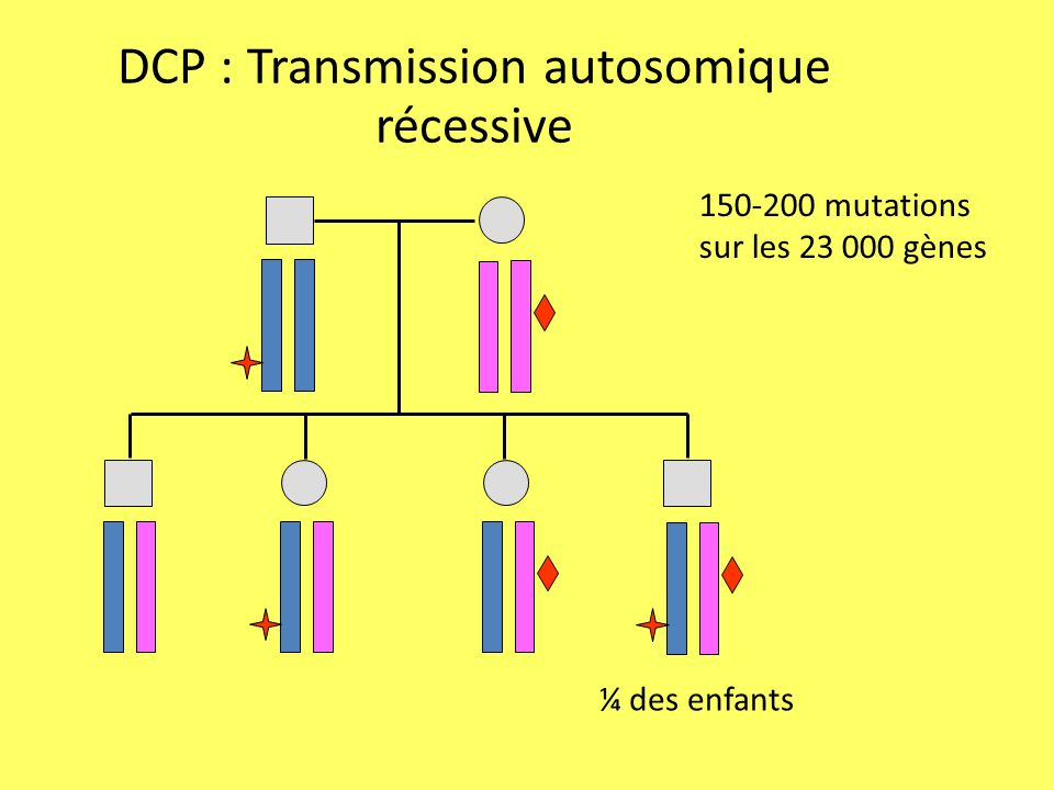 DCP : Transmission autosomique récessive