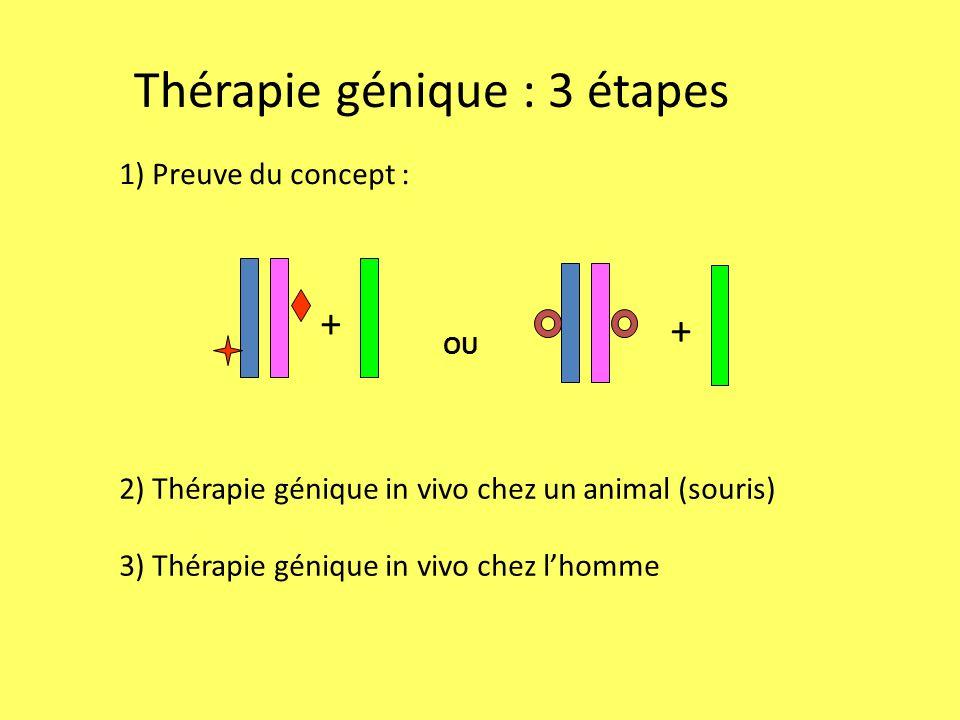 Thérapie génique : 3 étapes