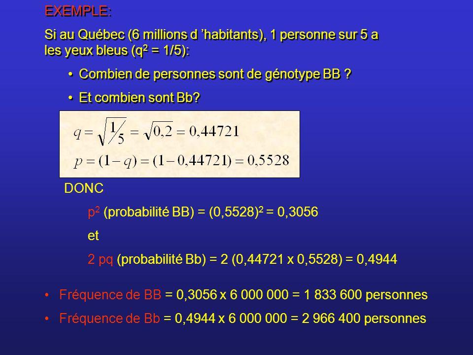 EXEMPLE: Si au Québec (6 millions d 'habitants), 1 personne sur 5 a les yeux bleus (q2 = 1/5): Combien de personnes sont de génotype BB