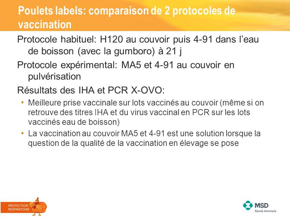 Poulets labels: comparaison de 2 protocoles de vaccination