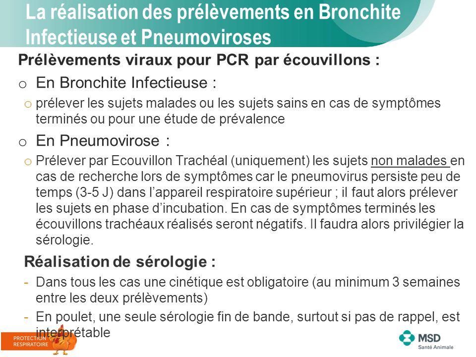La réalisation des prélèvements en Bronchite Infectieuse et Pneumoviroses