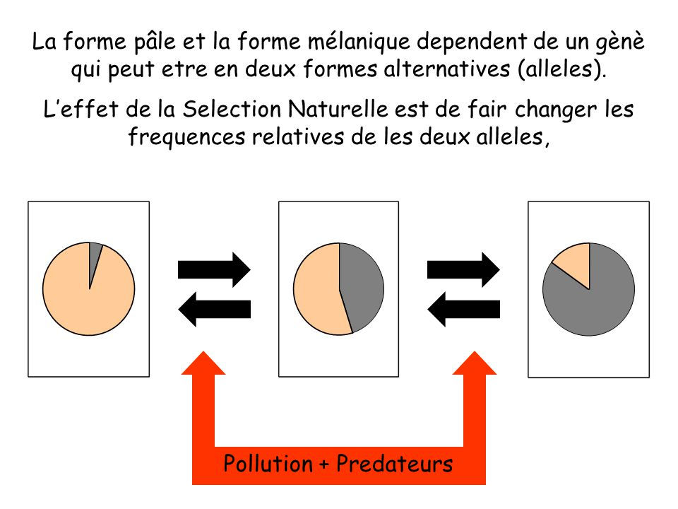 Pollution + Predateurs