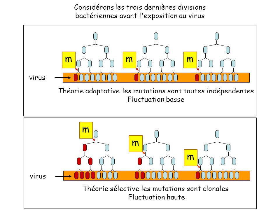 Considérons les trois dernières divisions bactériennes avant l exposition au virus