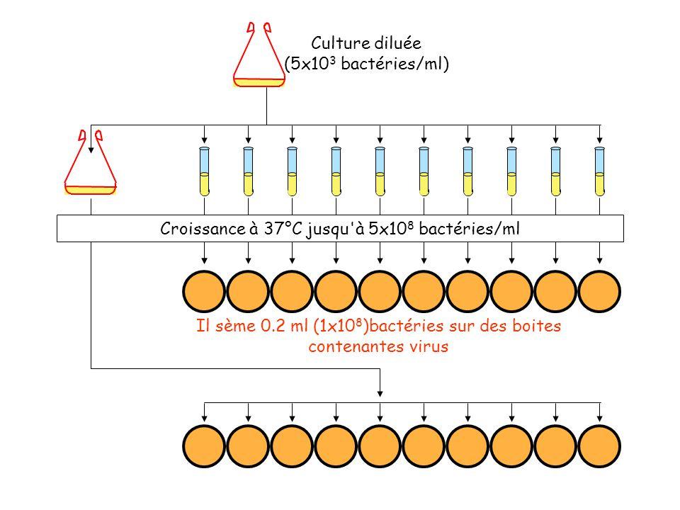Croissance à 37°C jusqu à 5x108 bactéries/ml