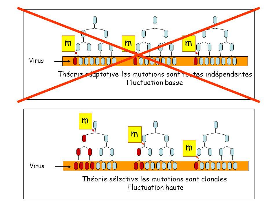m Théorie adaptative les mutations sont toutes indépendentes