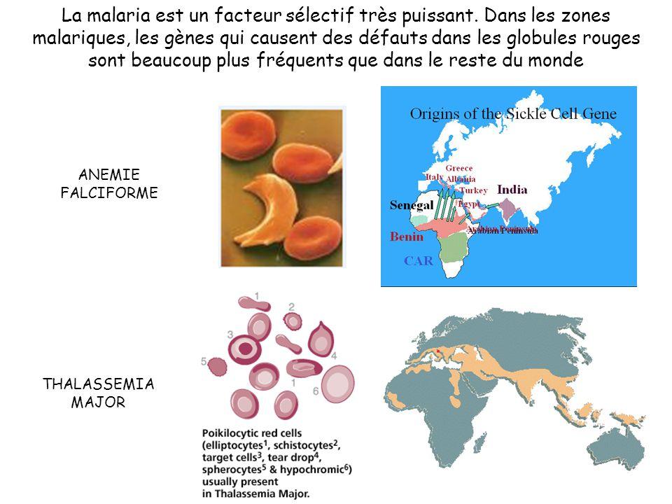 La malaria est un facteur sélectif très puissant