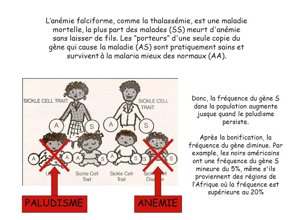 L'anémie falciforme, comme la thalassémie, est une maladie mortelle, la plus part des malades (SS) meurt d anémie sans laisser de fils. Les porteurs d une seule copie du gène qui cause la maladie (AS) sont pratiquement sains et survivent à la malaria mieux des normaux (AA).