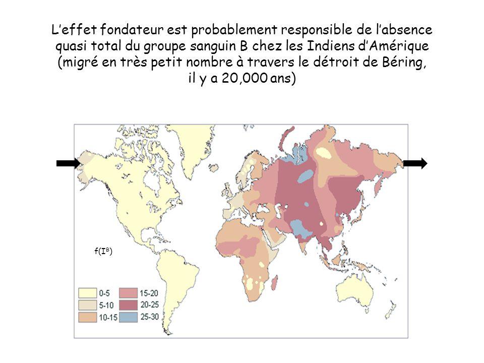 L'effet fondateur est probablement responsible de l'absence quasi total du groupe sanguin B chez les Indiens d'Amérique (migré en très petit nombre à travers le détroit de Béring, il y a 20,000 ans)