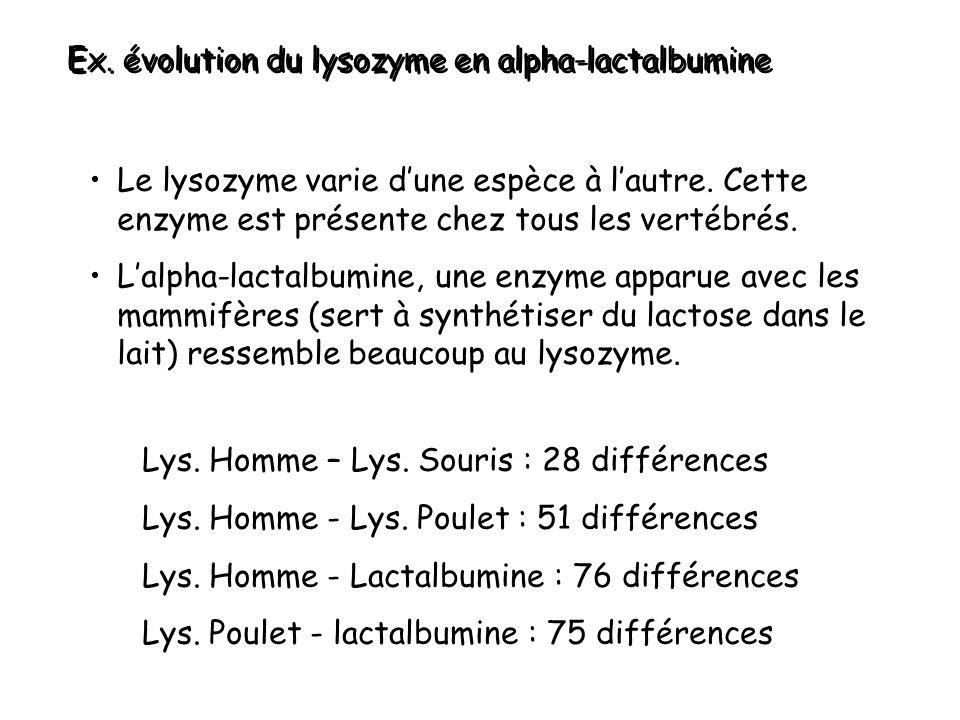 Ex. évolution du lysozyme en alpha-lactalbumine