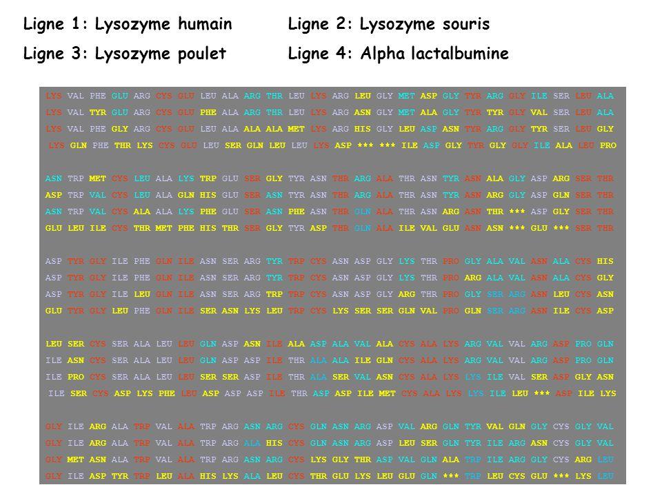 Ligne 1: Lysozyme humain Ligne 2: Lysozyme souris