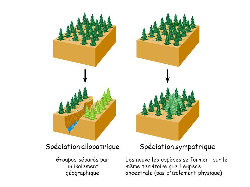 Spéciation allopatrique Spéciation sympatrique