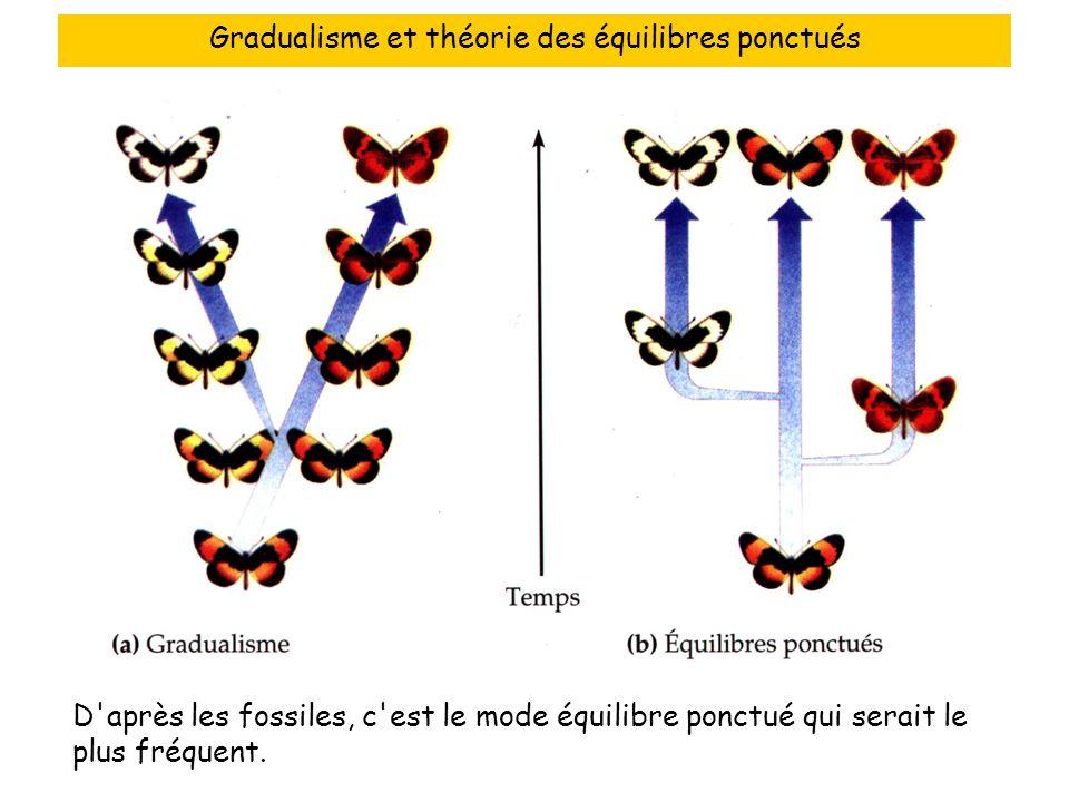 Gradualisme et théorie des équilibres ponctués