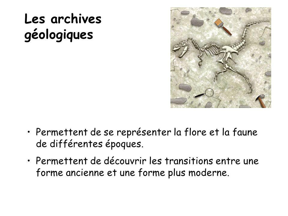 Les archives géologiques