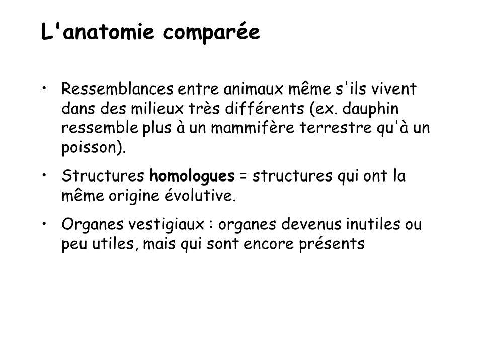L anatomie comparée