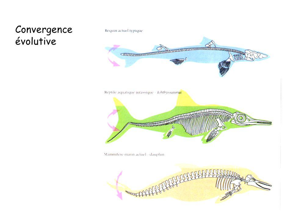 Convergence évolutive