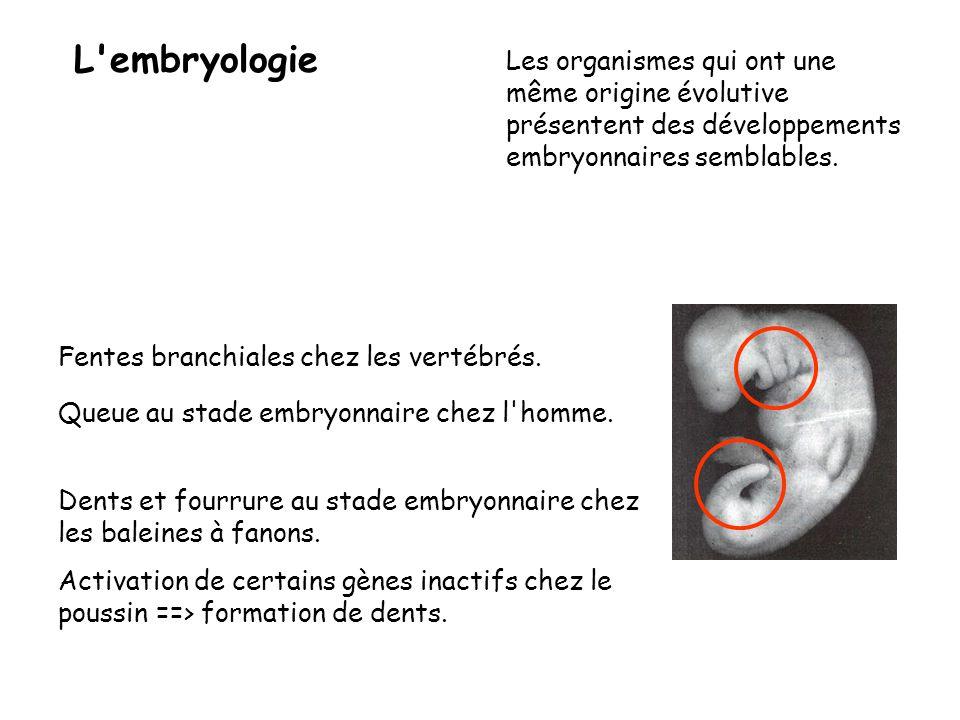 L embryologie Les organismes qui ont une même origine évolutive présentent des développements embryonnaires semblables.