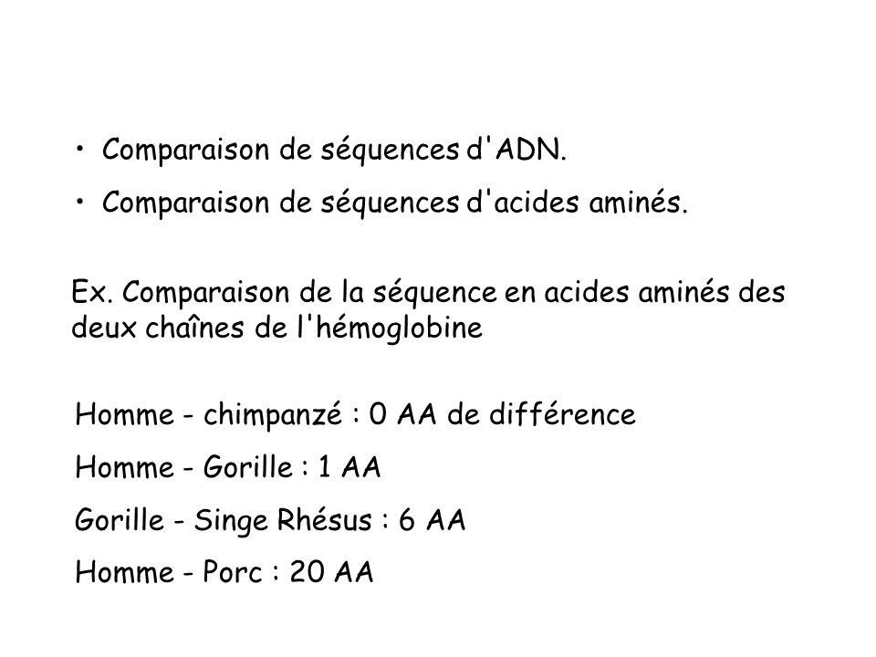 Comparaison de séquences d ADN.