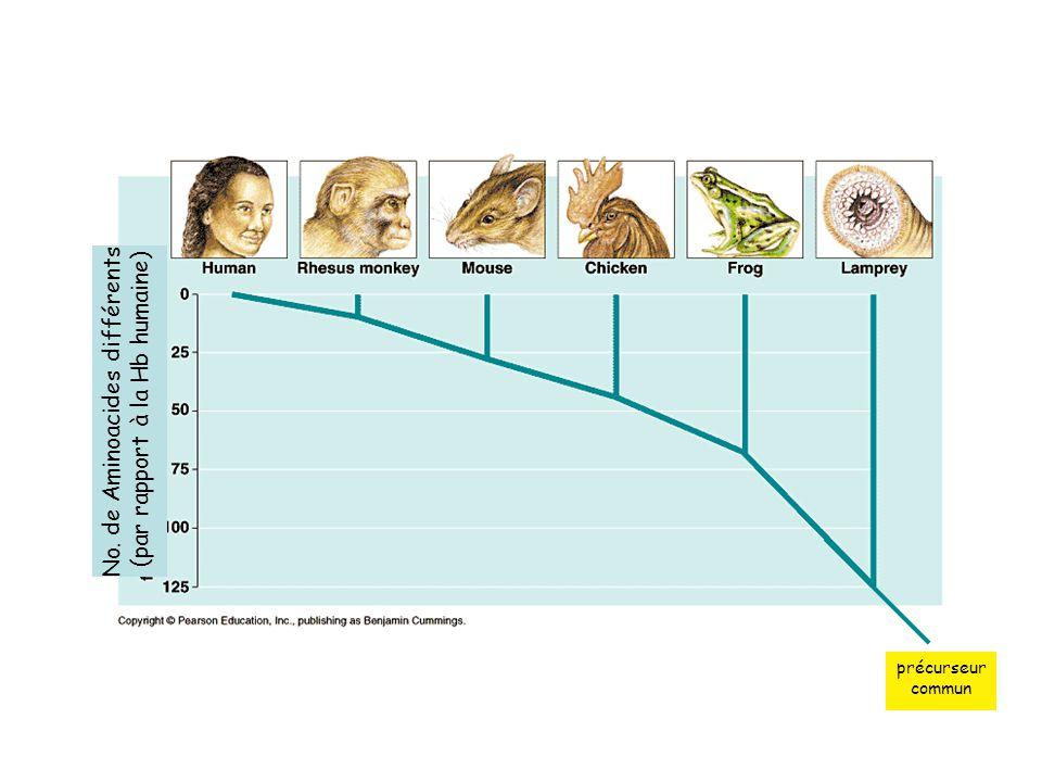 No. de Aminoacides différents (par rapport à la Hb humaine)