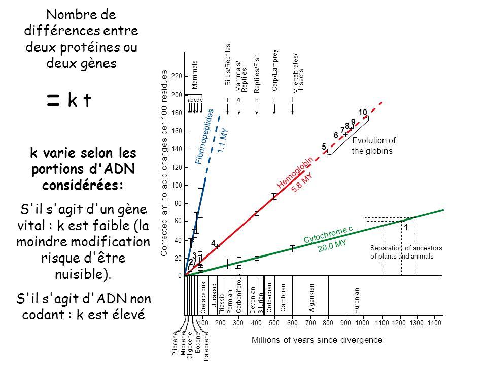 k varie selon les portions d ADN considérées: