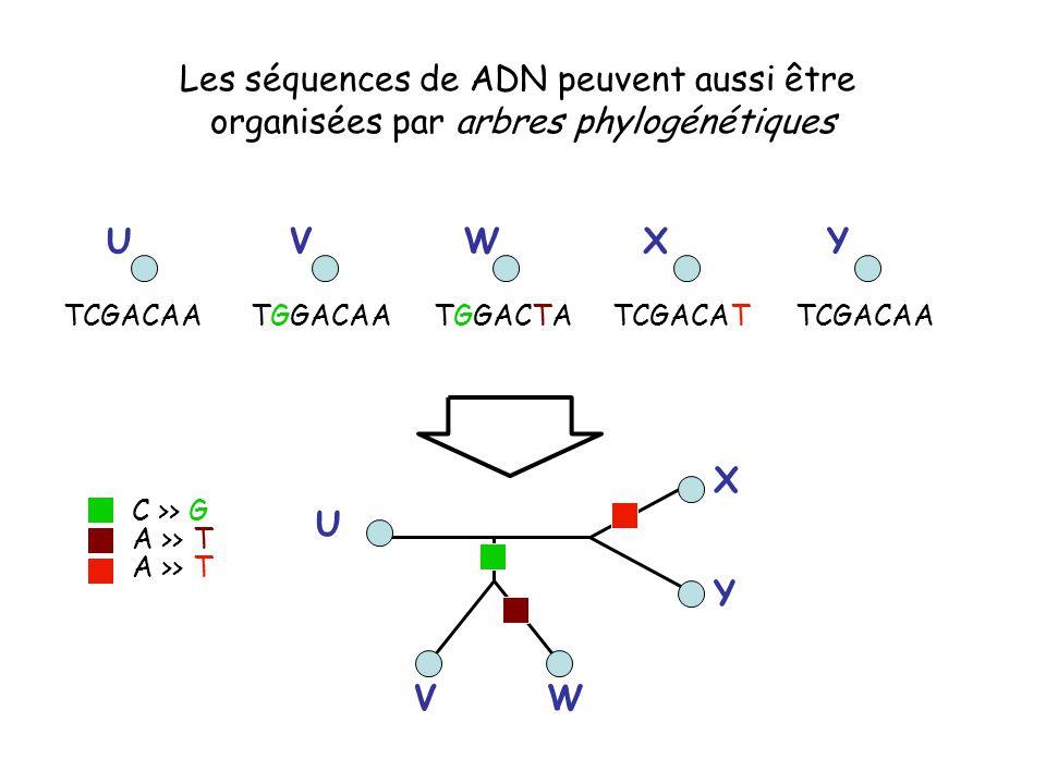 Les séquences de ADN peuvent aussi être