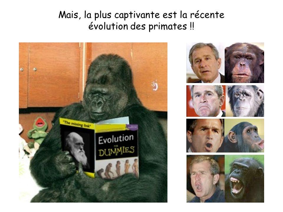 Mais, la plus captivante est la récente évolution des primates !!