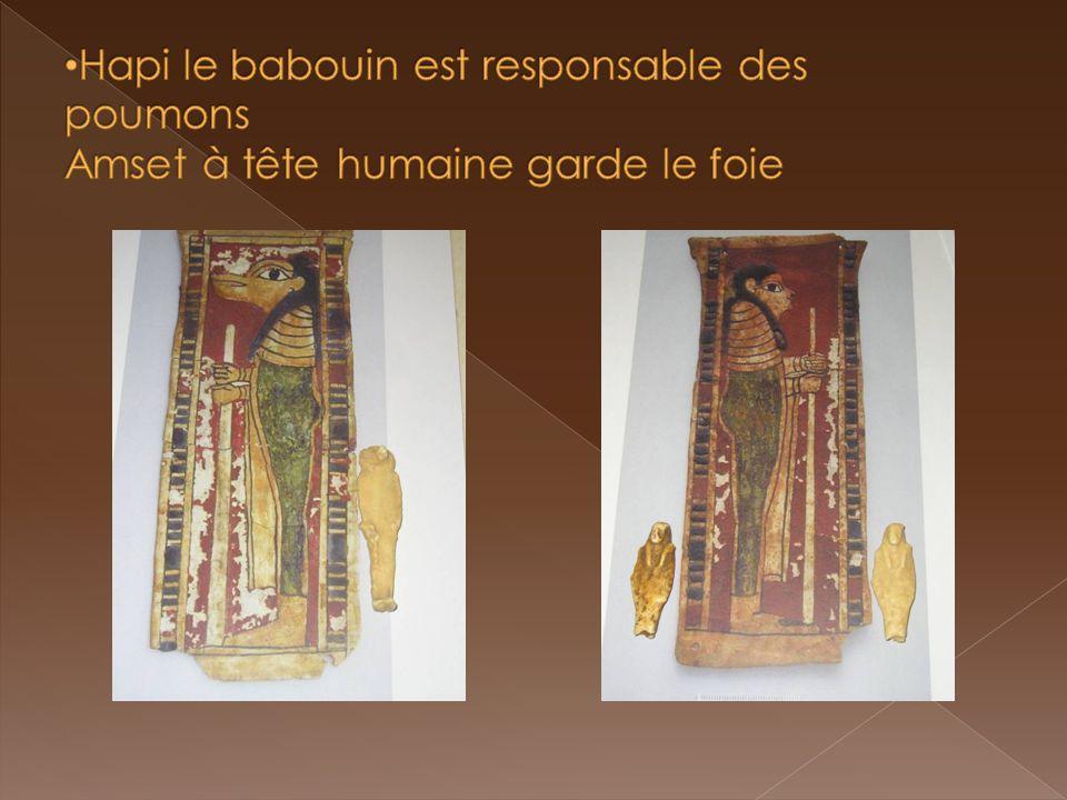Hapi le babouin est responsable des poumons Amset à tête humaine garde le foie
