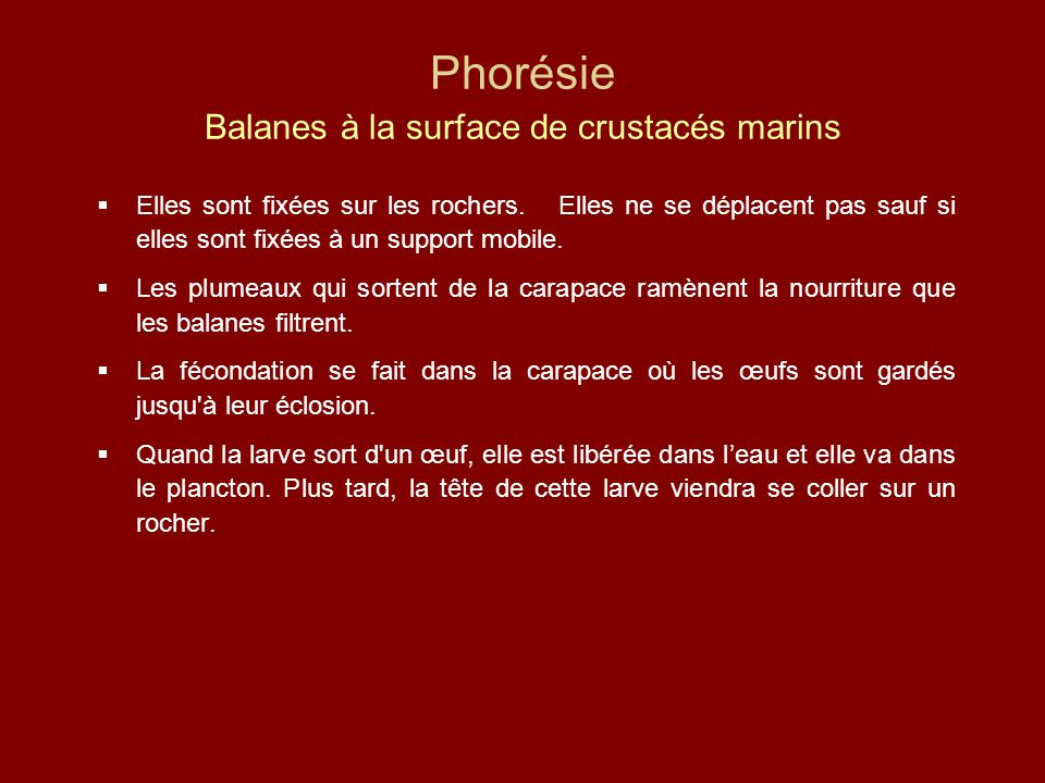 Phorésie Balanes à la surface de crustacés marins