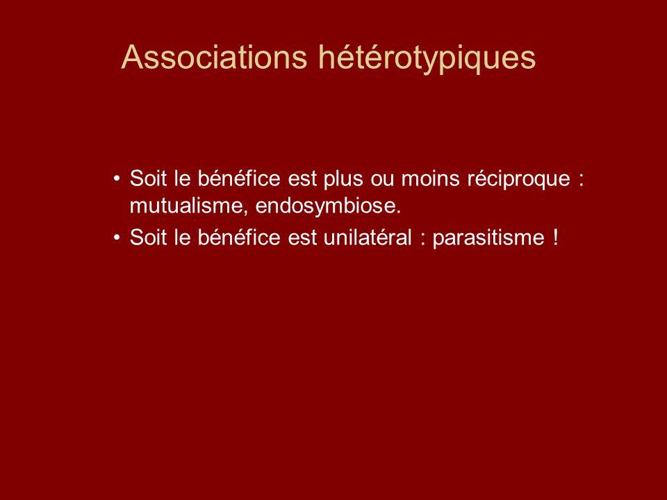 Associations hétérotypiques