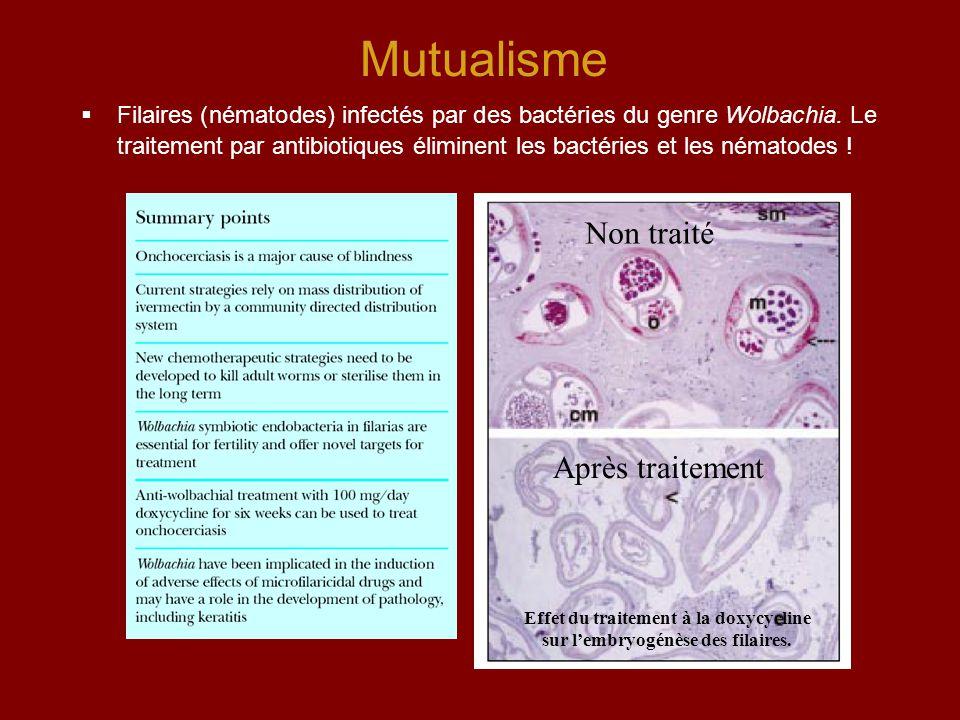 Effet du traitement à la doxycycline sur l'embryogénèse des filaires.