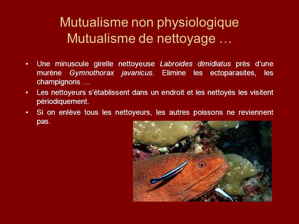 Mutualisme non physiologique Mutualisme de nettoyage …