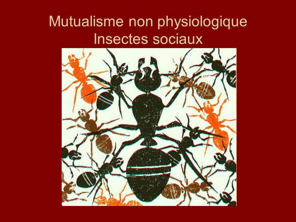Mutualisme non physiologique Insectes sociaux