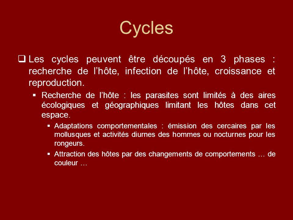 Cycles Les cycles peuvent être découpés en 3 phases : recherche de l'hôte, infection de l'hôte, croissance et reproduction.