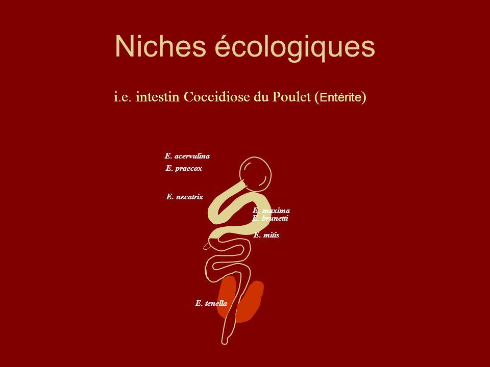 Niches écologiques i.e. intestin Coccidiose du Poulet (Entérite)