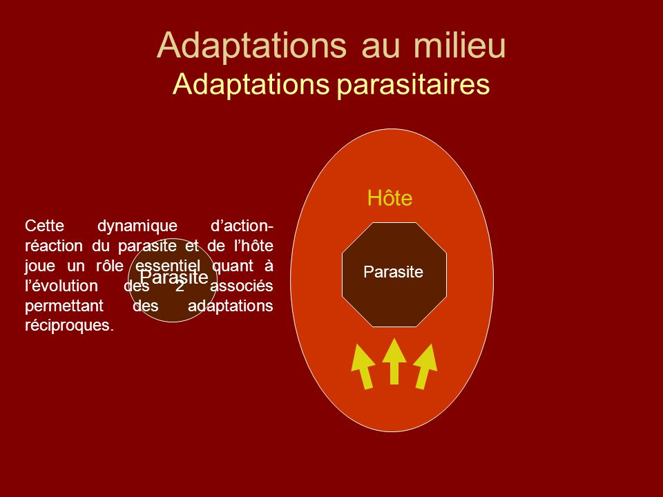 Adaptations au milieu Adaptations parasitaires
