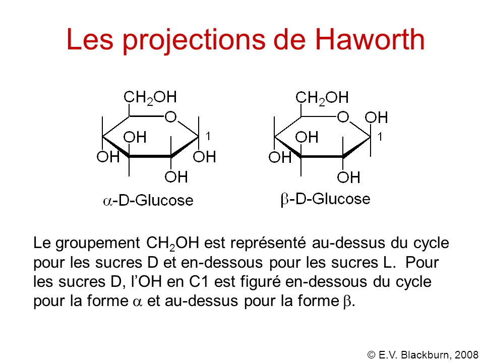 Les projections de Haworth