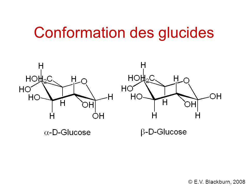 Conformation des glucides