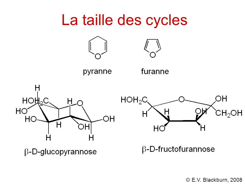 La taille des cycles