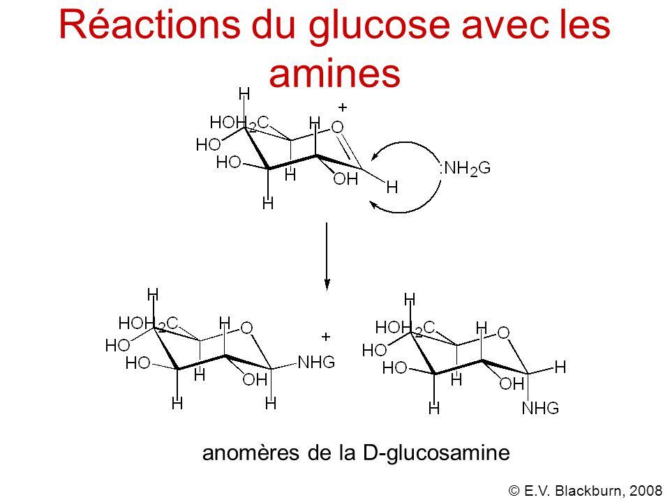 Réactions du glucose avec les amines