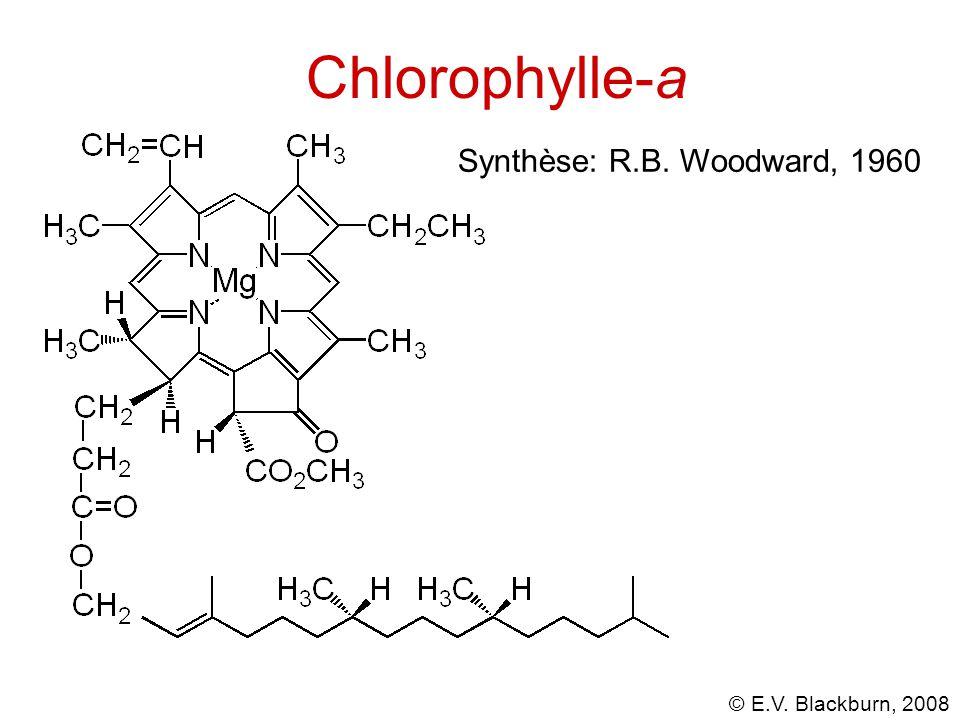 Chlorophylle-a Synthèse: R.B. Woodward, 1960