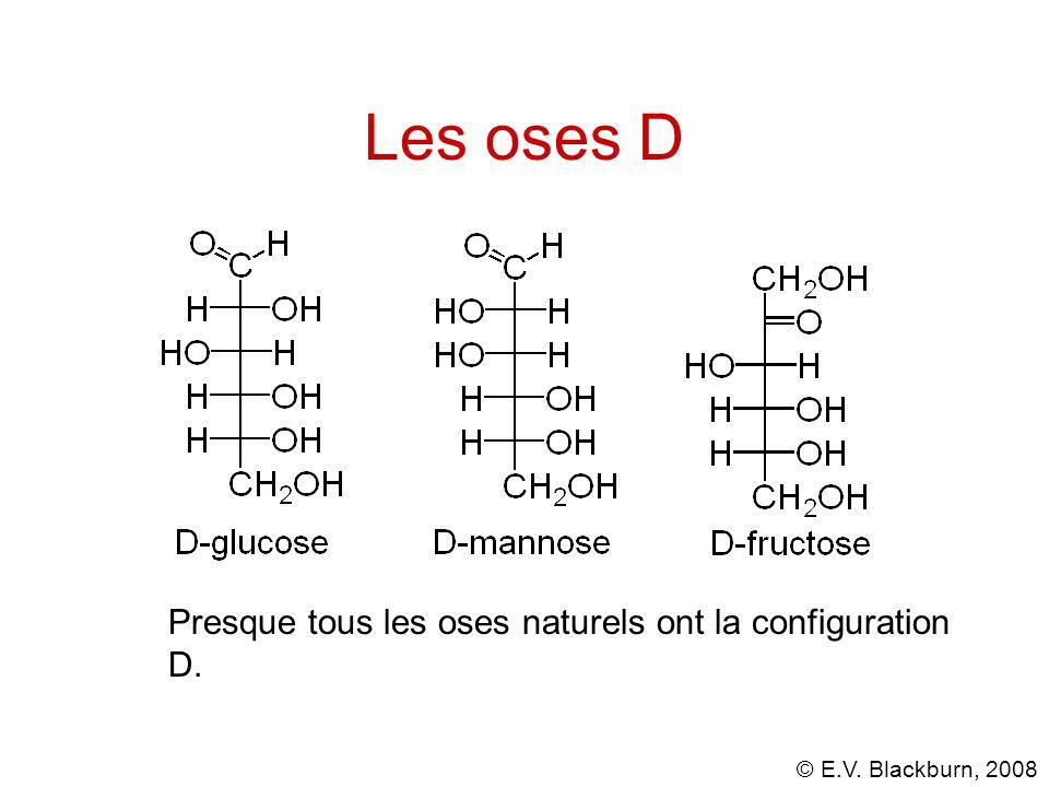 Les oses D Presque tous les oses naturels ont la configuration D.