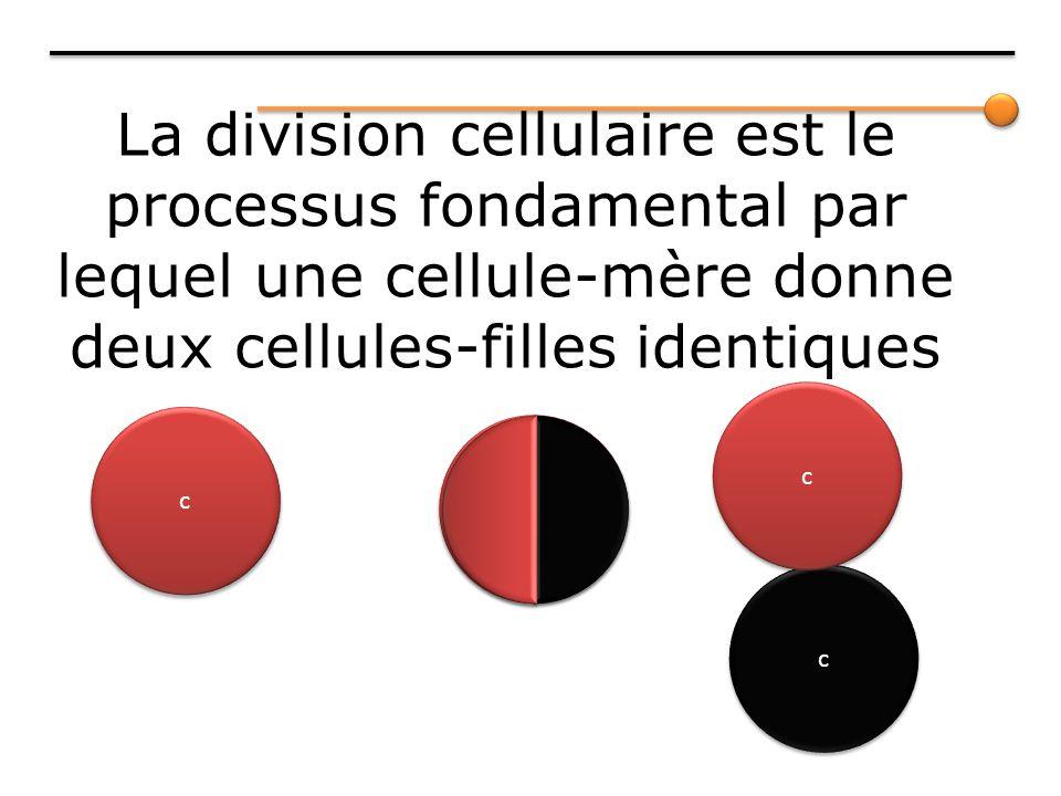 La division cellulaire est le processus fondamental par lequel une cellule-mère donne deux cellules-filles identiques