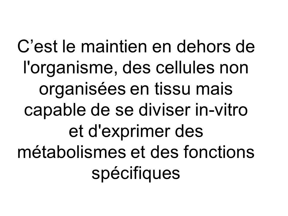 C'est le maintien en dehors de l organisme, des cellules non organisées en tissu mais capable de se diviser in-vitro et d exprimer des métabolismes et des fonctions spécifiques
