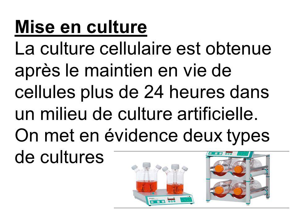 Mise en culture La culture cellulaire est obtenue après le maintien en vie de cellules plus de 24 heures dans un milieu de culture artificielle.