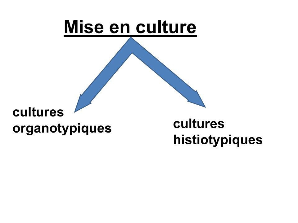 Mise en culture cultures organotypiques cultures histiotypiques