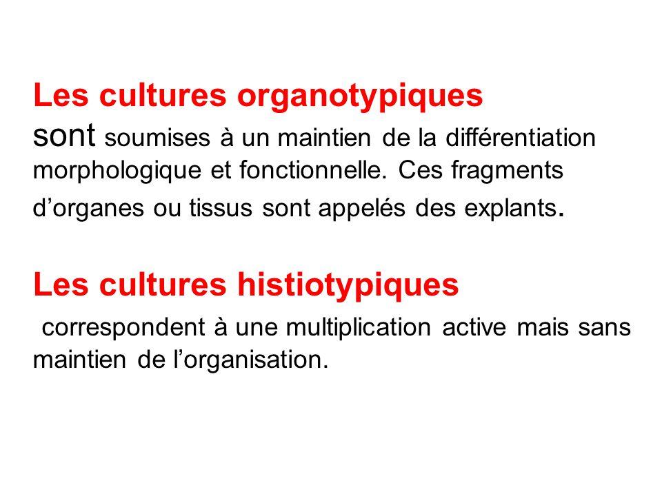 Les cultures organotypiques